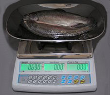 Adam 15kg Retail Scale<br>with fish scoop